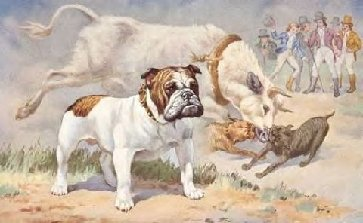 The Old Red English Bulldogs Kennel Inc