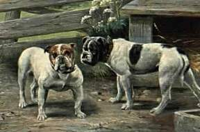 Old Time Bulldogs