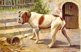 oldebulldogge2